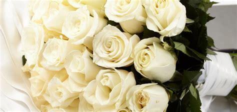 imagenes de flores blancas significado rosas cuidados ramos tipos lenguaje y significado en