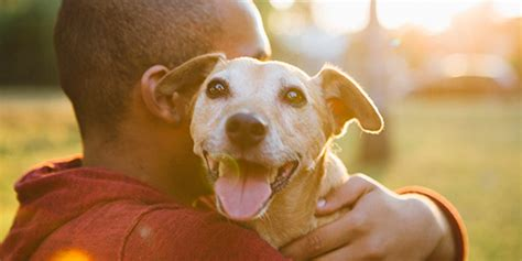can dogs be bipolar bipolar pets how dogs can help symptoms of ptsd bphope