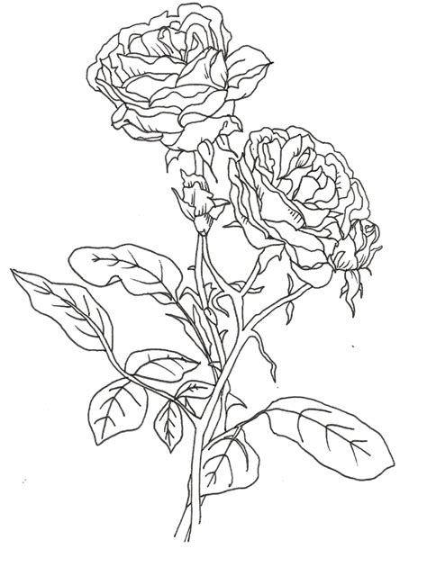 rose bush coloring page free coloring pages of a rose bush