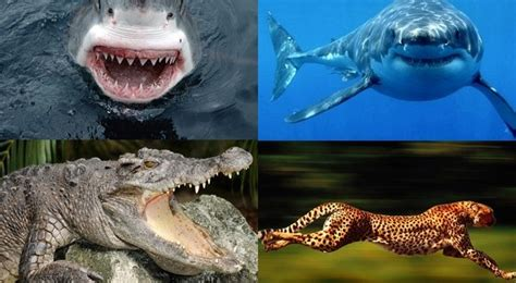 Top 10 Most Dangerous Animals by Top 10 World S Most Dangerous Animals By Brazilianferalcat