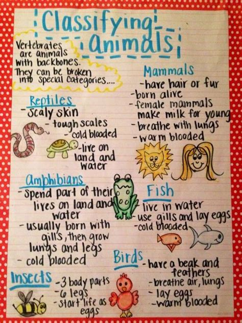 6 Facts About Skinbook The New by The Animal Classification Anchor Chart I Made For My