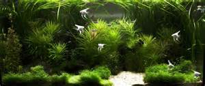 style aquascape natural style aquascape with white sand patch as focal point aquarium planning