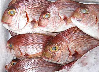 come cucinare un dentice dentice un pesce azzurro molto prelibato dal sapore