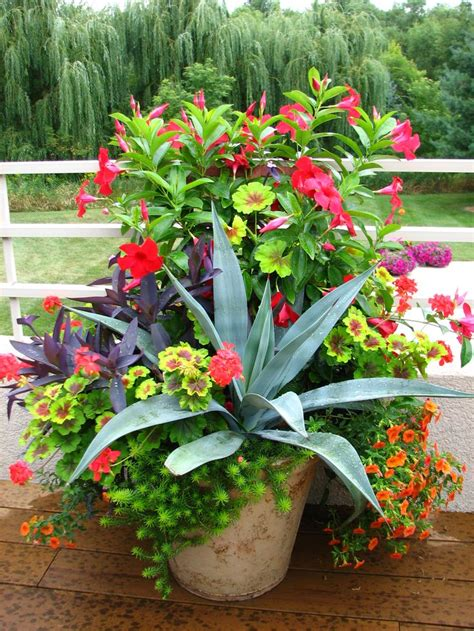 700 Best Images About Container Gardening Ideas On Garden Container Ideas
