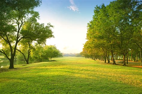 landscape trees m a c tree landscape home