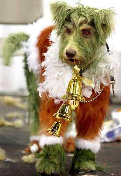 groomers turn dogs  horses turtles  madams dog grooming extreme pets christmas dog