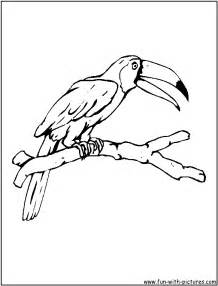 free coloring pages drawings toucan