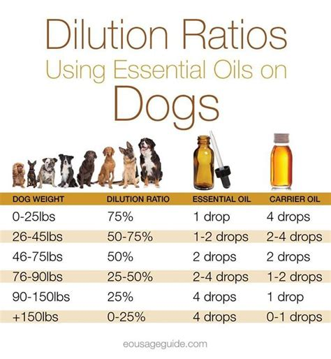are olives bad for dogs 1000 ideas about essential oils dogs on bad