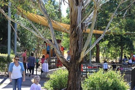Mount Annan Botanic Gardens Cafe Mount Annan Botanic Garden Sydney