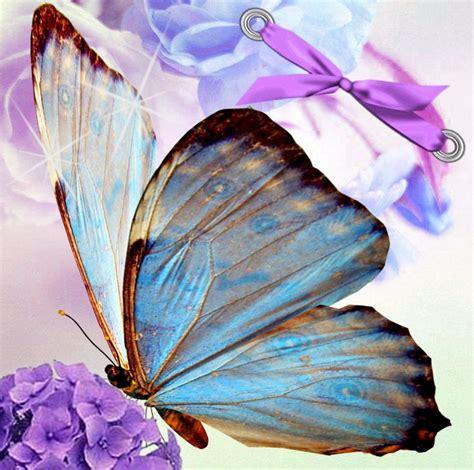 imagenes con mariposas imagenes de mariposas con frases auto design tech