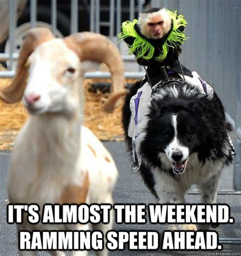Weekend Dog Meme - it s almost the weekend ramming speed ahead weekend
