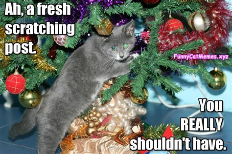Cat Christmas Tree Meme - cat christmas present cat christmas meme