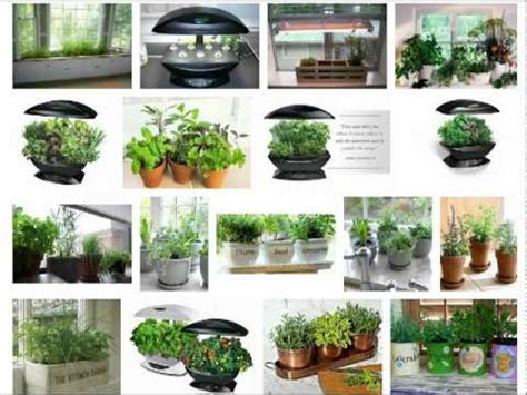 how to grow an indoor herb garden how to grow an indoor herb garden