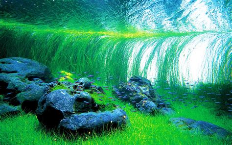 Takashi Amano Aquascaping by Takashi Amano Creator Of The Nature Aquarium Aquascaping