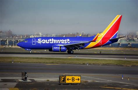 southwest airlines dogs emotional support bites on southwest airlines flight ny daily news
