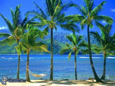 amaca sul mare palme sulla spiaggia
