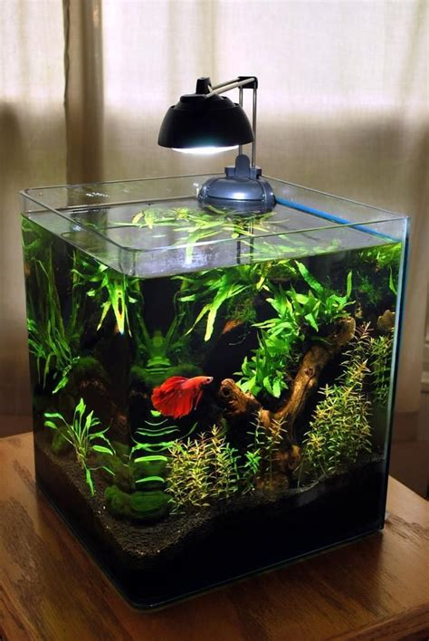 design your aquarium online 5 gallon betta fish aquarium aquarium ideas pinterest