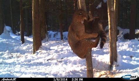 7 trail cam photos that prove nature is truly unforgiving