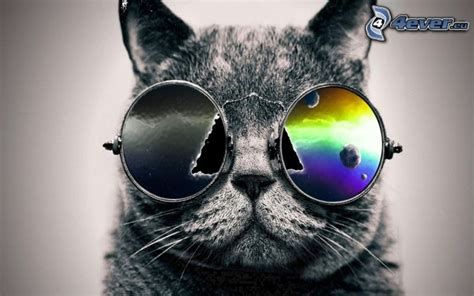 wallpaper hd chat lunette chat gris