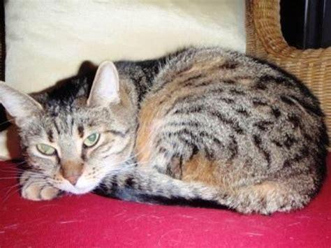 katzen haus katzenbetreuung in wien katzensitting catsitter katze