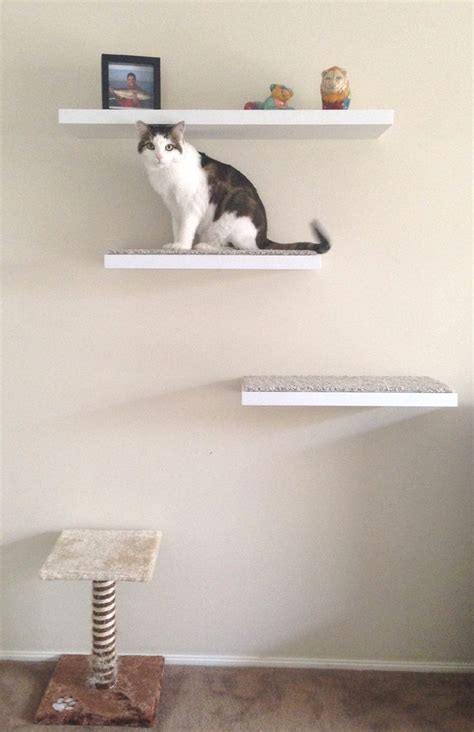 diy cat shelves for fido