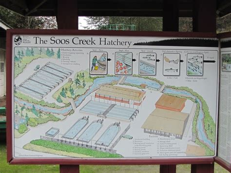 layout of hatchery blog from the bog
