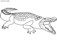 allie alligator coloring page top 76 crocodile coloring pages free coloring page