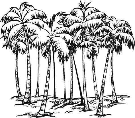 Tree Coloring Pages Palm Tree Coloring Page