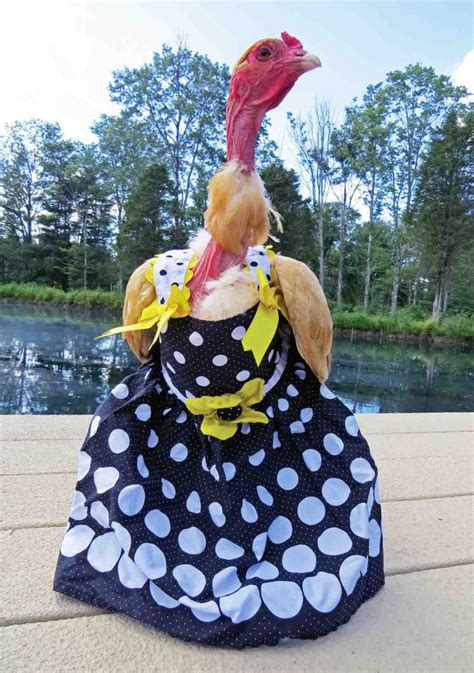 Chiken Dress Chicken Clothes For And Countryside