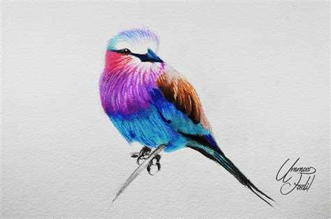 lilac breasted roller prismacolor pencils by f a d i l