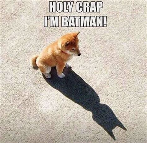 Im Funny Memes - i m batman funny dog pictures fun things to do when bored
