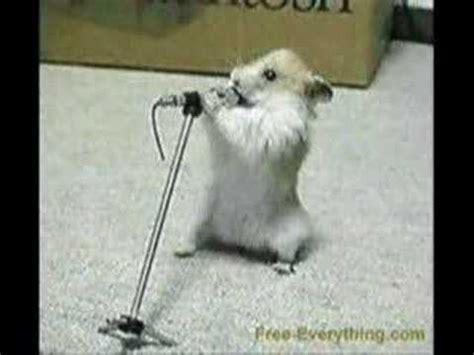 youtube music hamster dance crazy hamster dance youtube