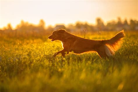 how to treat yeast infection in dogs how to treat fungal yeast infection in dogs entirelypets