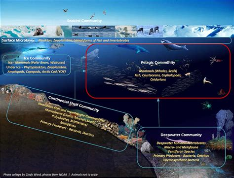 herding representative species figure e 2 arctic ecosystem surface microlayer nearshore continental shelf