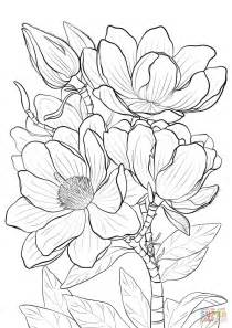 coloring pages of magnolia flowers cbells magnolia coloring page free printable coloring