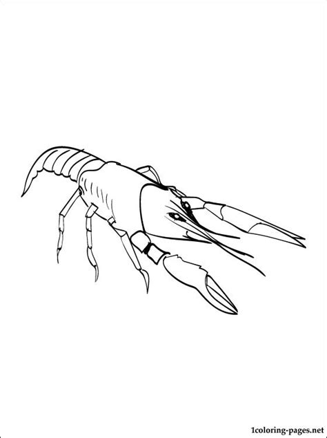 Crawfish Crayfish Coloring Page To Print Out Coloring Pages Crayfish Coloring Page