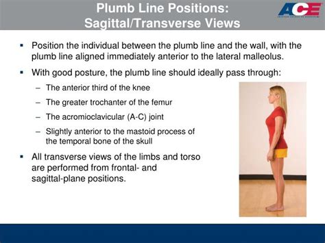 Plumb Line Assessment by Ppt Ace Personal Trainer Manual 4 Th Edition Chapter 7