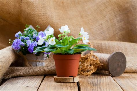 houseplants for low light conditions 10 best household plants for low light conditions home logic