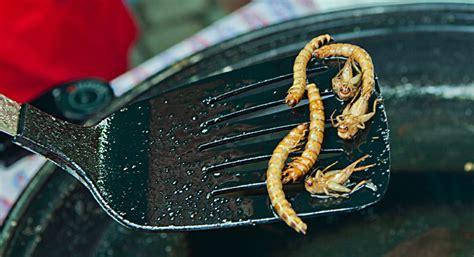 spinnen essen im schlaf insekten essen speisen wie im duschenc