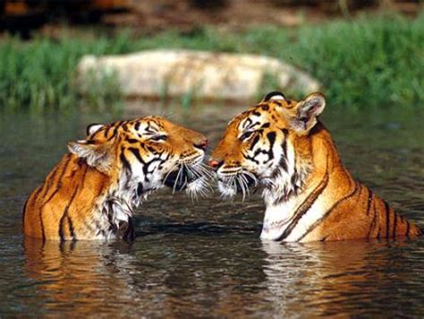 imagenes naturales de animales paisajes naturales im 225 genes