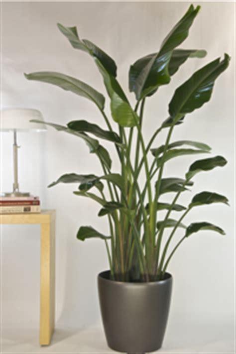 houston s online indoor plant pot store extra large houston s online indoor plant pot store best indoor