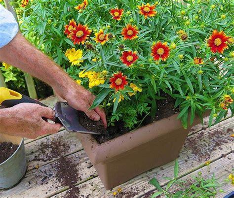 piante da terrazza piante da balcone le specie autunnali pi 249 per