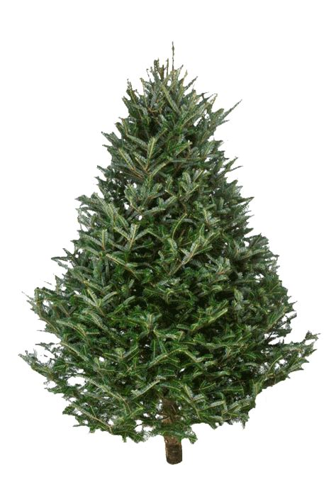 catchy collections of best type of real christmas tree to