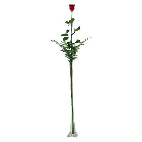 5 Foot Vases by Fresh Cut 3 5 Foot Single Stem With Clear Vase