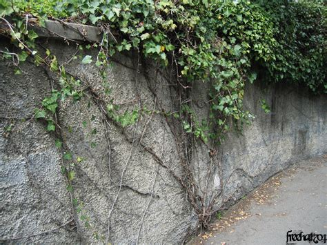 vine wall part 3 by freehat704 on deviantart