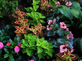 colorful shade plants perennial plants for shade homesfeed