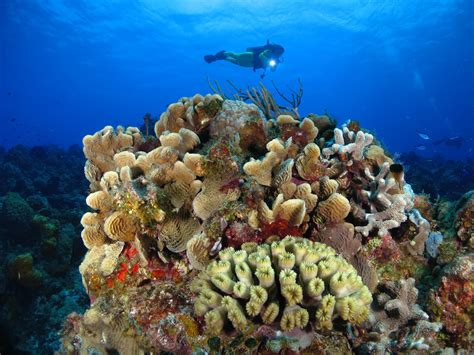 Best Diving In The Caribbean by The 9 Best Caribbean Coral Reefs For Scuba Diving