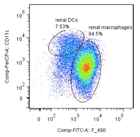 sle requirement analysis isolation of dendritic cells and macrophages from the