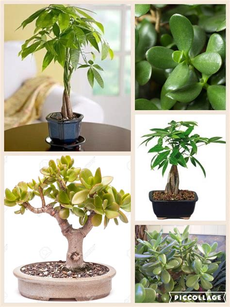 feng shui plants in bedroom money plant trees in feng shui best to place them in the se sector of your home and or office to