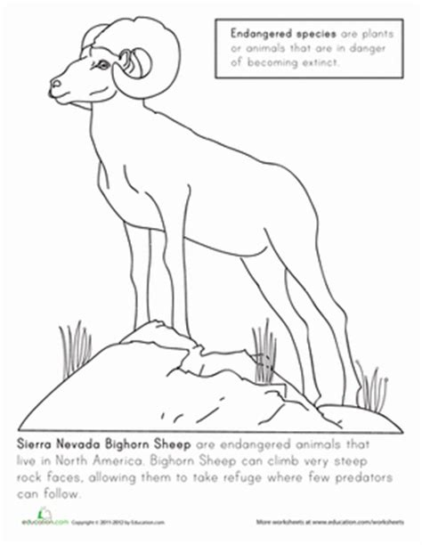 bighorn sheep coloring pages color the sierra nevada bighorn sheep coloring page